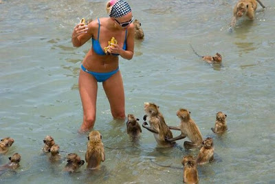 Epic Beach FAIL: let that be a lesson to you babe, never steal food of a wild pack of monkeys when you're t the beach.