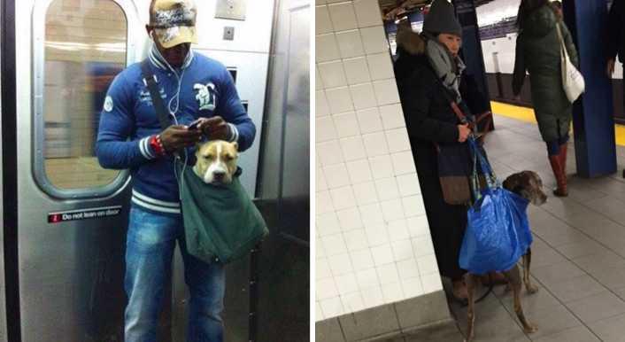 New Yorkban a metróba nem lehet kutyát bevinni csak ha befér egy táskába-  ez a 15 gazdi igazán kreatív – BuzzBlog e786291050