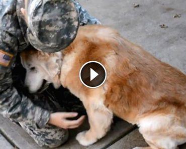 senior-dog